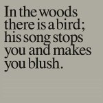 IN THE WOODS THERE IS A BIRD